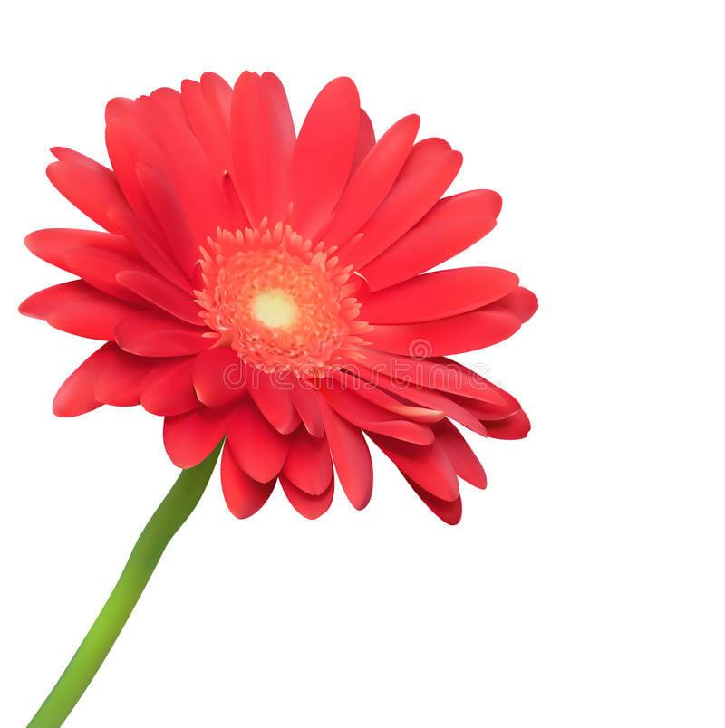 Fleur rouge, Bien Mieux