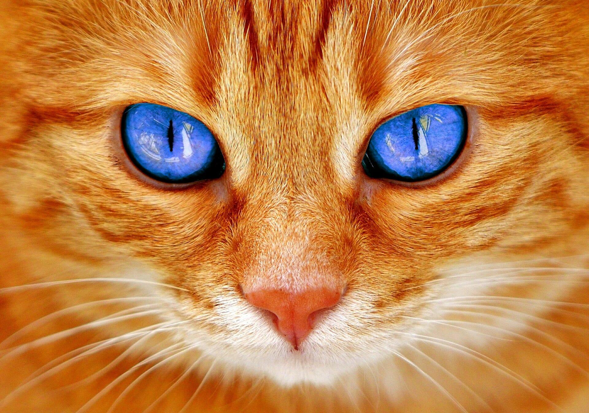 Le chat et les huiles essentielles - article Bien Mieux SAS